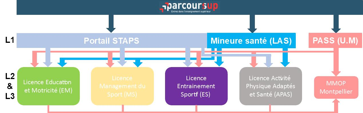 parcours STAPS UPVD